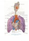 Ingrijirea Bolnavului cu Pneumonie Pneumococica
