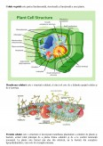 Imagine document Celula