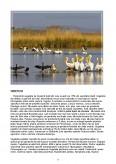 Imagine document Turismul in delta dunarii