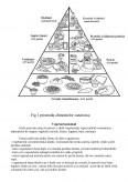 Imagine document Dieta alimentara pentru o persoana cu grupa de sange b3