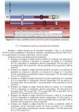 Imagine document Managementul Deseurilor Depozitele de Deseuri si Impactul Lor Asupra Mediului in Judetul Suceava