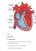Imagine document Ingrijirea Pacientilor cu Infarct Miocardic