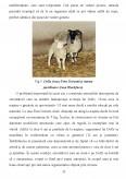 Imagine document Studiu de caz privind clonarea din punctul de vedere al stiintei si al bioeticii