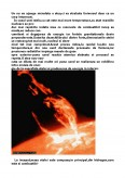 Plasma In Naturaelemente De Astrofizica