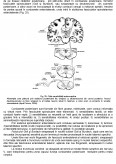 Fiziologie Animala Generala - Suport de Curs
