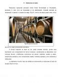 Tehnologia de Producere a Vinurilor Rosii de Calitate