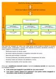 Functiile Managementului Serviciilor Sociale