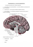 Neurotransmitatori