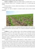 Imagine document Managementul activitatilor in exploatatia agricola Mosteanu, comuna Schitu, judetul Olt