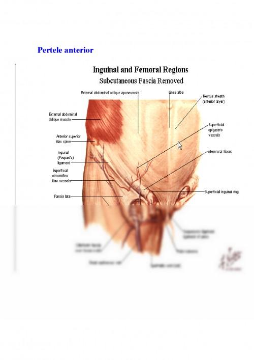 Afectiuni ale peretelui abdominal eventratii hernii